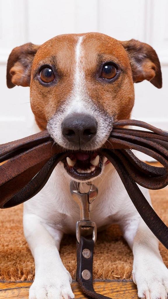 iPhone 6 achtergrond met een mooie hond