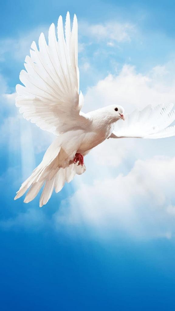 iPhone 5 achtergrond met witte duif