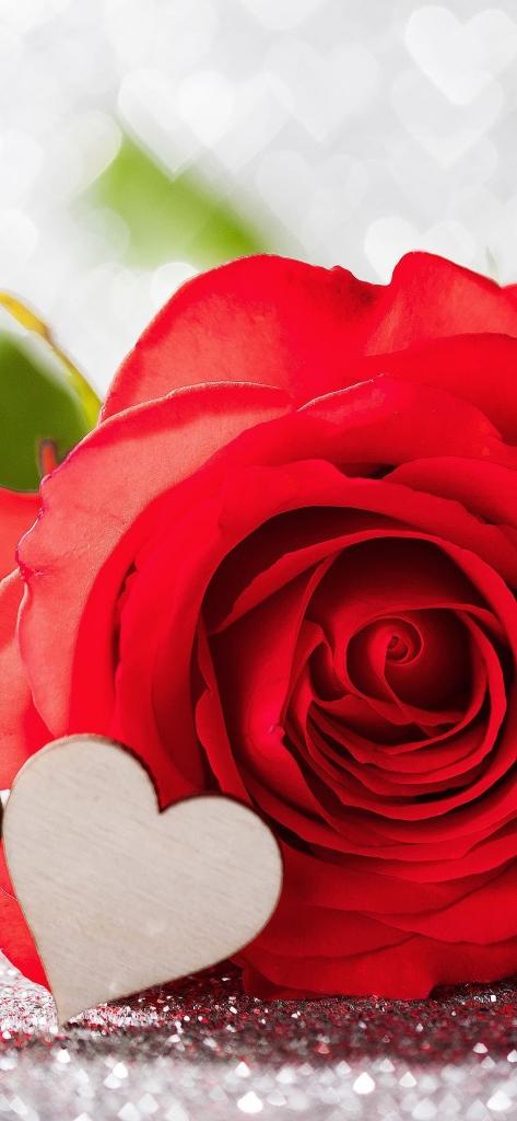 iPhone X achtergrond met rode roos en liefdes hartje